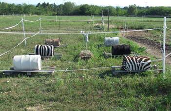 Zebracsíkok termofiziológiai vizsgálata: új magyarázat a zebracsíkok szerepére